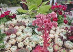 какие растения для альпийской горки