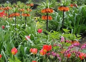 как посадить луковичные, посадка луковичных