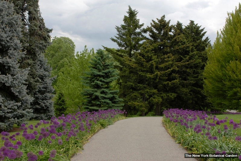Главное о выращивании садовых цветов мускари Cельхозпортал