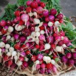 Как вырастить редис летом: 5 главных правил