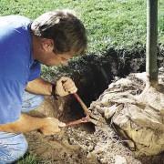 как посадить дерево, как правильно посадить дерево