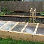 Сроки посева семян овощных культур в открытый грунт