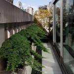 Можжевельник горизонтальный: выращивание и использование в  дизайне сада