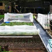 Что можно посадить в огороде в апреле  в открытый грунт и в теплицу