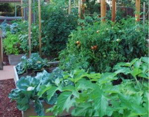 что делать в огороде в июле