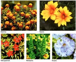 когда сеять цветы на рассаду