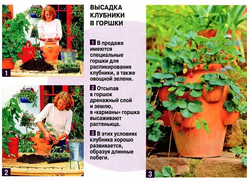 домашний огород на подоконнике, домашний огород на балконе