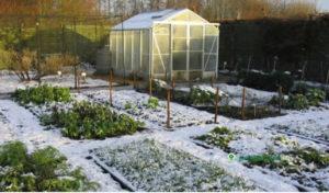 работы в огороде в марте