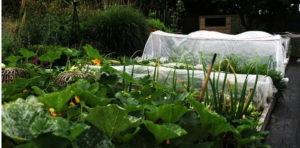 cевооборот овощных культур на дачном участке, плодосмен, законы плодосмена