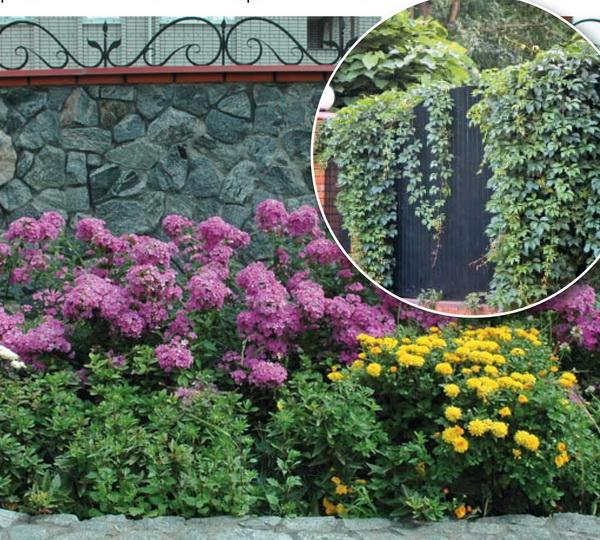 какие растения посадить у забора, что посадить у забора