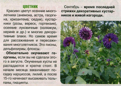 работы в сентябре в саду,  работы в сентябре в огороде,  работы в сентябре в цветнике