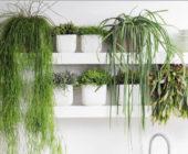 Комнатные кактусы без колючек: виды, фото и правила ухода