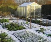 Осенние работы в саду в ноябре в Подмосковье