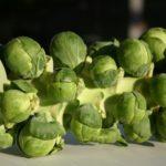 Как вырастить брюссельскую капусту: 5 важных советов