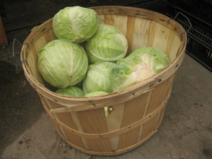выращивание капусты на даче