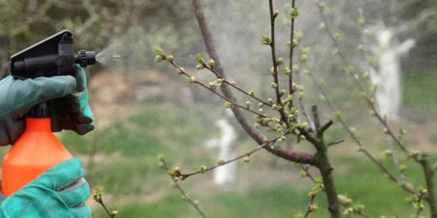 обработка сада весной медным купоросом
