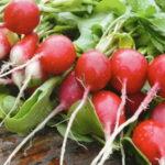 Почему редис идет в стрелку и  не образует корнеплод