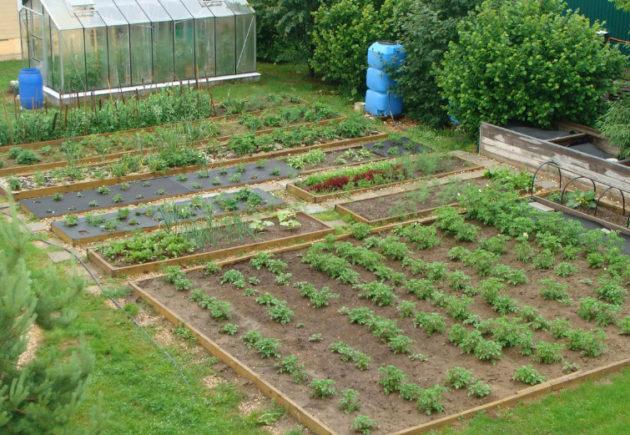 что делать в огороде в июне