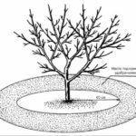 Чем весной подкормить плодовые деревья и кустарники