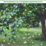 Необходимый уход за плодовыми деревьями летом