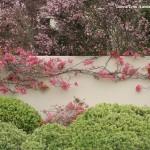 Шпалера в саду: шесть идей для вашего сада