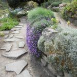 Альпийские растения: дизайнерские идеи для вашего сада