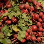 Основные правила выращивания редиса