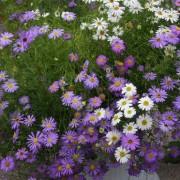 Какие цветы посадить в мае в открытый грунт