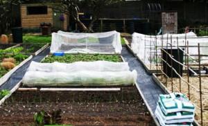 что можно посадить в огороде в апреле, что можно посадить в теплицу в апреле, что посадить в апреле в открытый грунт