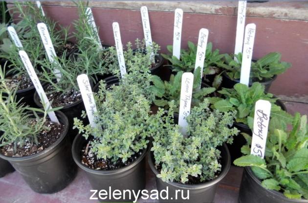 как вырастить зелень на подоконнике, какую зелень можно вырастить на подоконнике