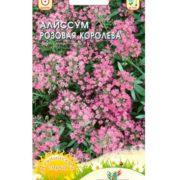 алиссум однолетний, алиссум однолетний выращивание из семян, алиссум однолетний посадка и уход