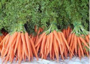 вырастить крупную морковь, вырастить сладкую морковь, когда посадить морковь