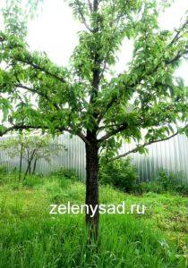 Когда лучше пересаживать деревья и кустарники