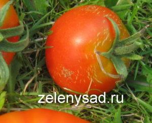 почему трескаются помидоры в теплице, почему трескаются помидоры в теплице при созревании