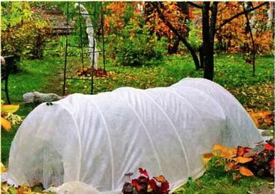 как правильно укрывать розы на зиму, как правильно укрыть плетистую розу на зиму, как правильно укрыть штамбовую розу на зиму, как правильно укрыть кустовую розу на зиму