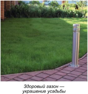 как сделать газон на даче, как сделать красивый газон