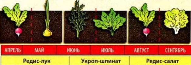 грядка для зелени