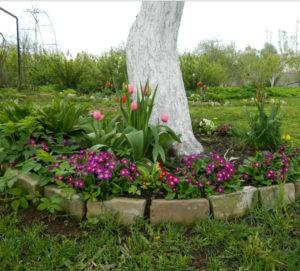 Какие цветы посадить под деревьями