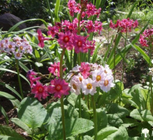 Какие растения посадить в тени