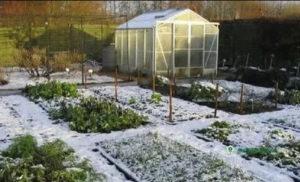 работы в саду в ноябре в Подмосковье