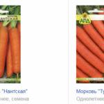 Выбираем лучшие сорта моркови для Подмосковья