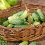 Удачные огурцы: советы по выращиванию