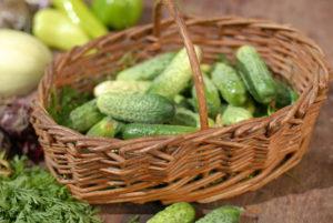 огурцы советы по выращиванию