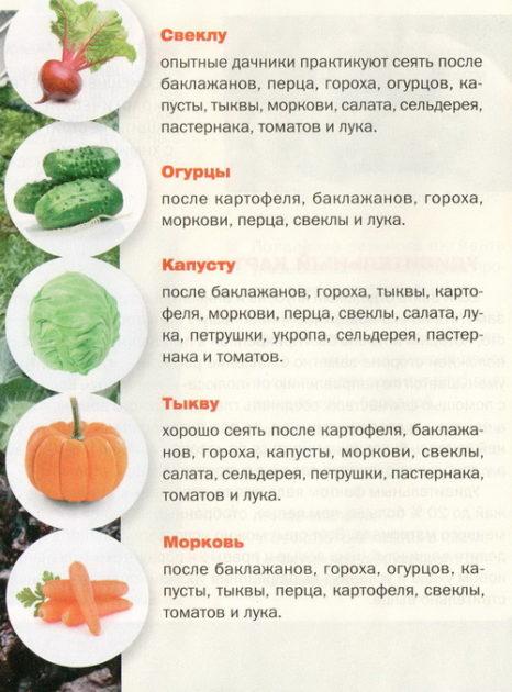 чередование овощных культур на огороде