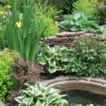Обустраиваем пруд и подбираем растения для пруда на даче
