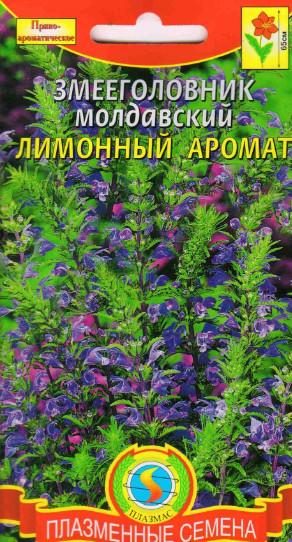 змееголовник молдавский выращивание из семян