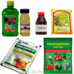 Триходерма — лучшая защита растений