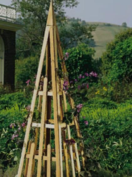 Если вы посадили вьющиеся сорта, то обеспечьте подрастающим растениям поддержку. Это может быть натянутая сетка или решетка, шпалера либо просто колышки, к которым вы будете подвязывать растения. Очень удобно сажать вьющуюся фасоль возле забора из сетки-рабицы, по которому и будут виться растения.  Подвязывать фасоль надо начинать, когда растения достигнут высоту 10-15 см.  Чтобы избежать этой работы, можно выбрать кустовые сорта спаржевой фасоли.