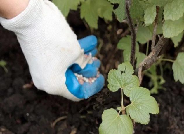 чем подкормить сад